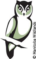 Manitoba Wildlands Owl