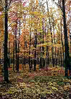 Canadian Decideous forest