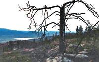 Forestfire damage