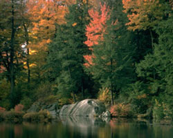 fall trees at the lake