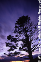 Purple sky and tree